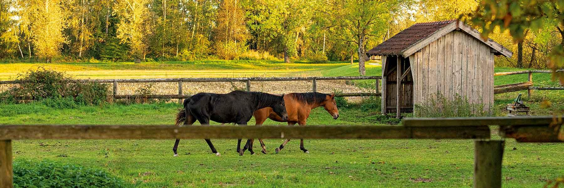 Idyllische Landschaf in Bad Birnbach im Rottal